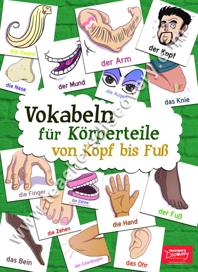 Body Parts Vocabulary German Poster