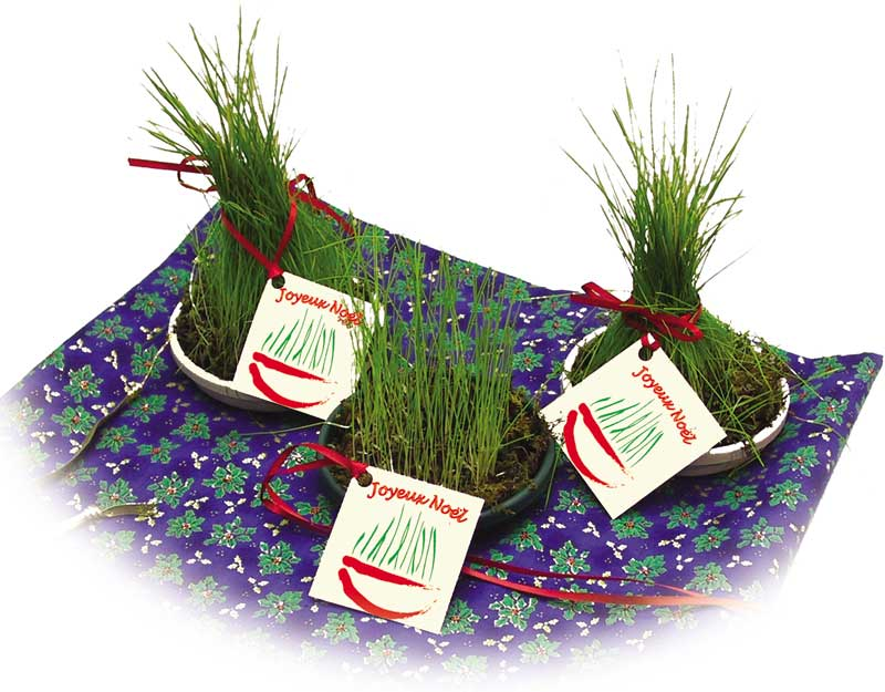 Sainte Barbe Christmas Seed Kit