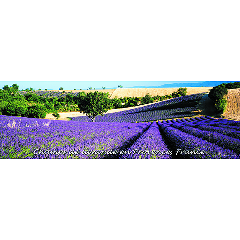 Provence Panoramic Poster